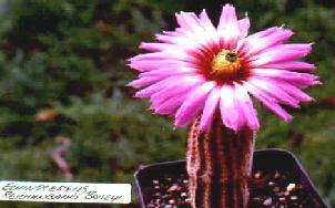 cactuspag.jpg
