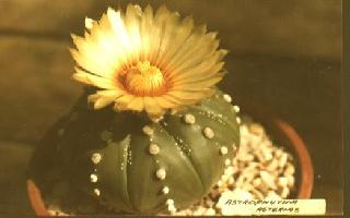 cactuspic.jpg