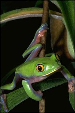 homepage_frog.jpg